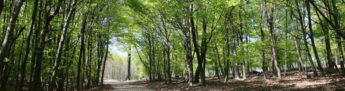 Lainzer Tiergarten Vienna Lainzer Tiergarten